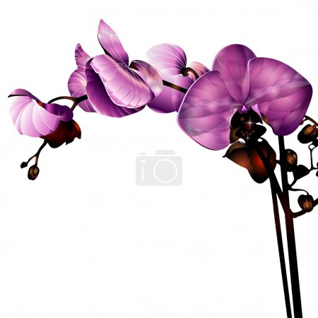 Illustration for Orchid flower label with space for your message - Royalty Free Image