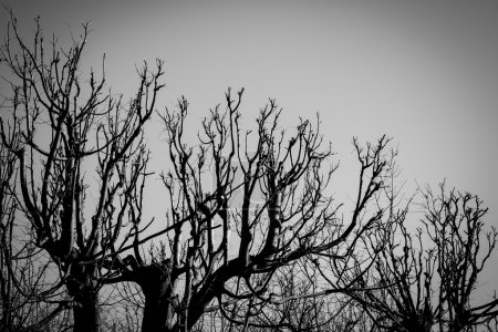 Black and white trees silhouettes