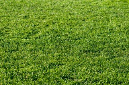 Photo pour Belle herbe verte d'un terrain de football. - image libre de droit