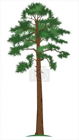 Vector Pine-tree