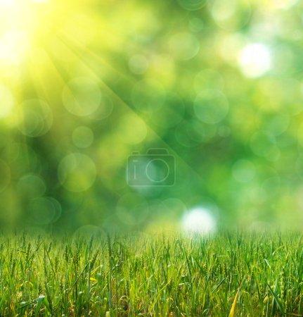 green ears of wheat on defocused light green background