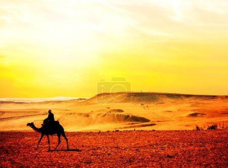 Photo pour Maroc, chameau dans le désert - image libre de droit