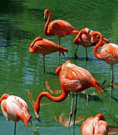 Florida Pink Flamingos
