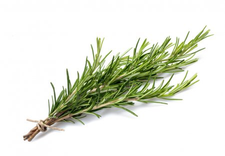 Photo for Rosemary branch isolated on White background - Royalty Free Image