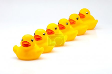 yellow gum ducks