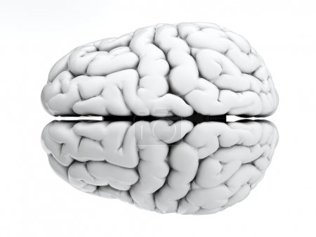 3d render of brain on white background...