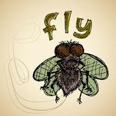 Fly color sketch
