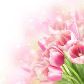 Постер Цветы цветут тюльпаны