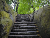 Stone stairway, Central Park, New York City