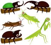 Grasshopper Beetle Praying Mantis