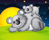 two bears resting
