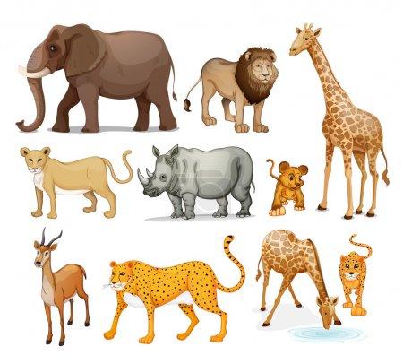 Photo pour Illustration des animaux sur fond blanc - image libre de droit