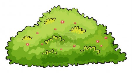 Illustration of a green bush on a white background...