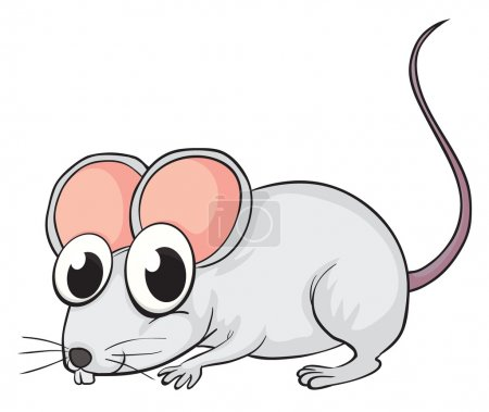 Illustration of a mouse on a white background...