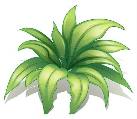 Illustration pour Illustration d'une plante sur fond blanc - image libre de droit