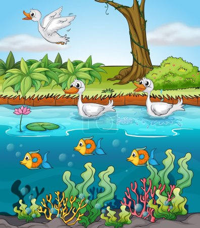 Swans and fishes