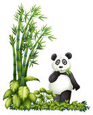 A panda eating