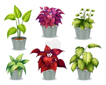 Illustration for Illustration of six non-flowering plants on a white background - Royalty Free Image
