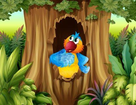 A parrot inside a tree hollow