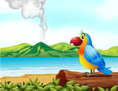 A colorful parrot at the beach
