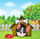 A dog inside a dog house at a backyard with an apple tree