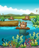 Three beavers in the river