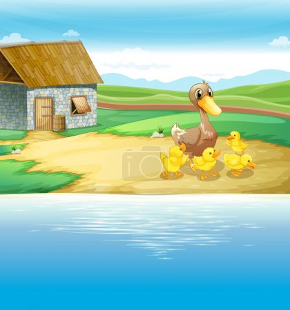 A family of duck near the river