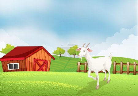 A goat in the farm with a wooden house at the back
