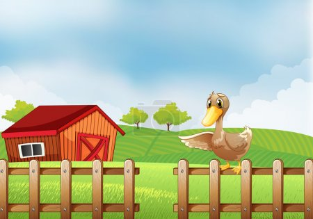 A duck at the farm