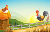 A hen and a rooster in the farm