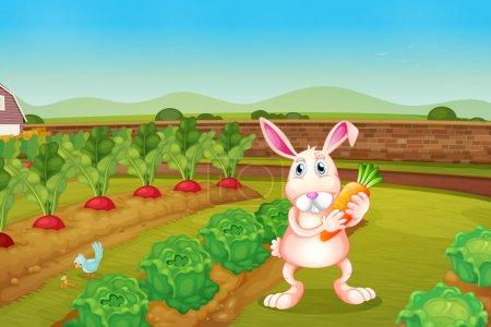 A bunny holding a carrot along the garden