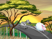 A zebra and a sheep running at the road