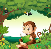 A monkey reading a book at the forest