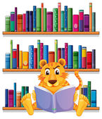 An angry tiger reading in front of the wooden shelves with books