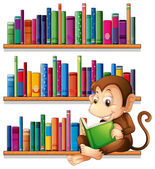 A monkey reading in front of the bookshelves