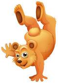 Hravé medvěd hnědý