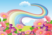 Flowers at the hilltop and a rainbow in the sky