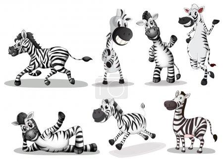 Illustration for Illustration of the playful zebras on a white background - Royalty Free Image