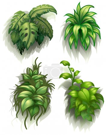 Illustration for Illustration of the leafy plants on a white background - Royalty Free Image