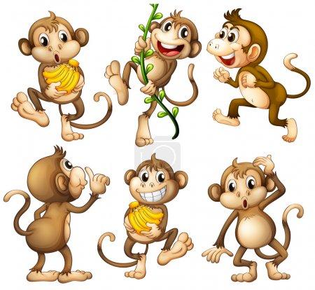 Playful wild monkeys