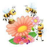 Blooming flowers with bees