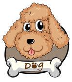 A brown puppy