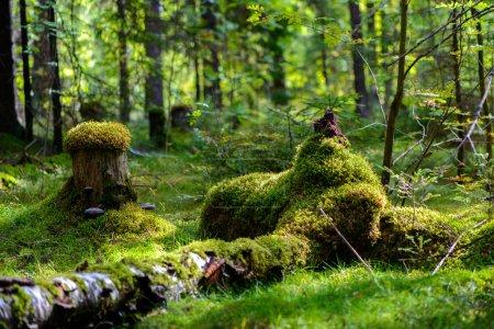 Photo pour La Russie. La nature et la forêt. Divers paysages forestiers - image libre de droit