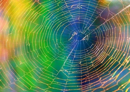 spider web (cobweb) background