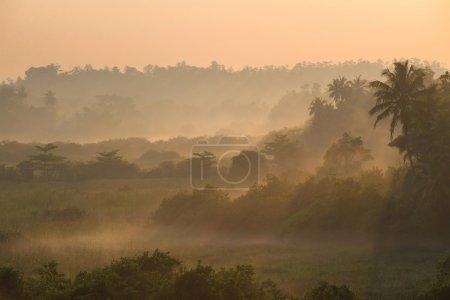 Photo pour Magnifique lever de soleil au-dessus de jungle de palmiers tropicaux avec les rayons du soleil et le brouillard matinal épais - image libre de droit