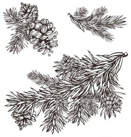 Hand drawn christmas design christmas pine branch and pine cones