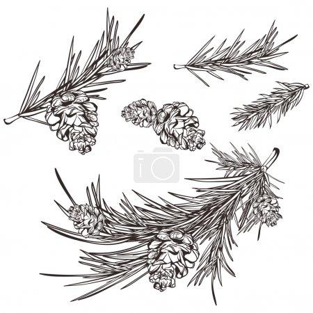 Hand drawn retro pine branches