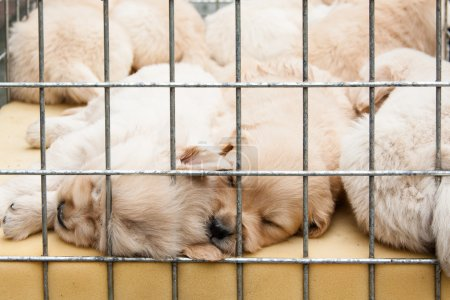 Puppies inside a cage for sale