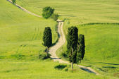 Tuscany green hills in Italy