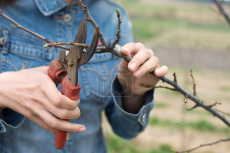 Happy gardener woman using pruning scissors in orchard garden. Pretty female worker portrait